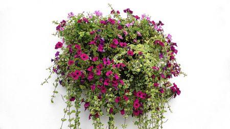 hanging-basket-1771079_960_720